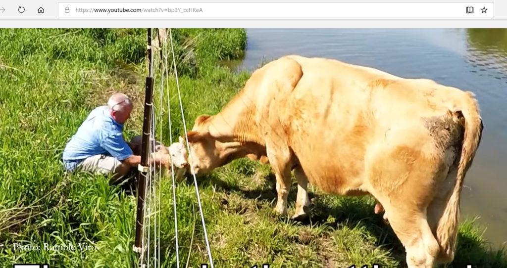 calf-rescue-2-1024x542.jpg